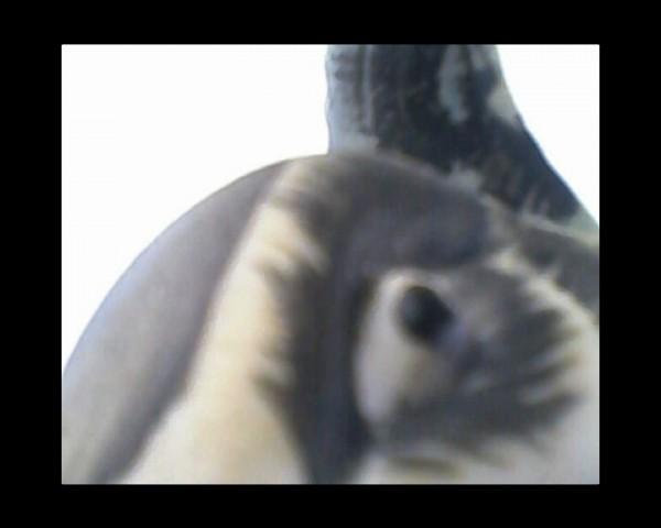 2013 Single channel DV Video. 14:31 min